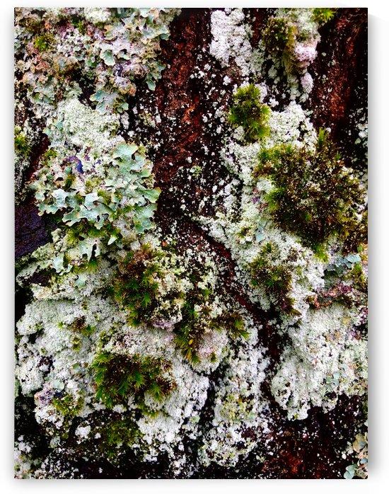Lichen Landscape by BotanicalArt ca