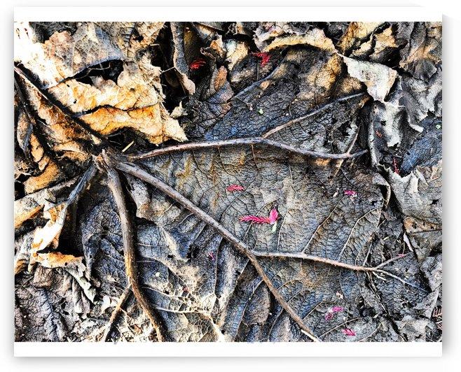 Skeleton Leaf by BotanicalArt ca