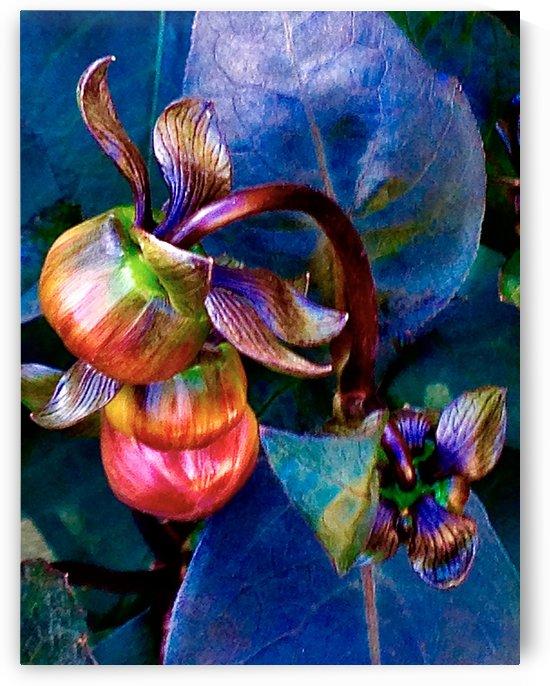 Budding Peony by BotanicalArt ca