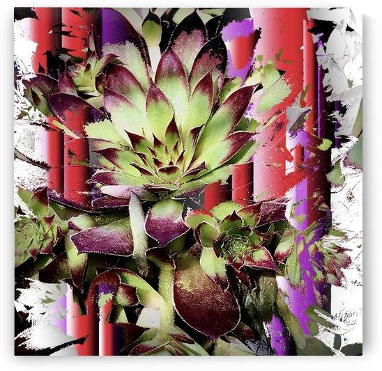 Canada Day Cactus by BotanicalArt ca
