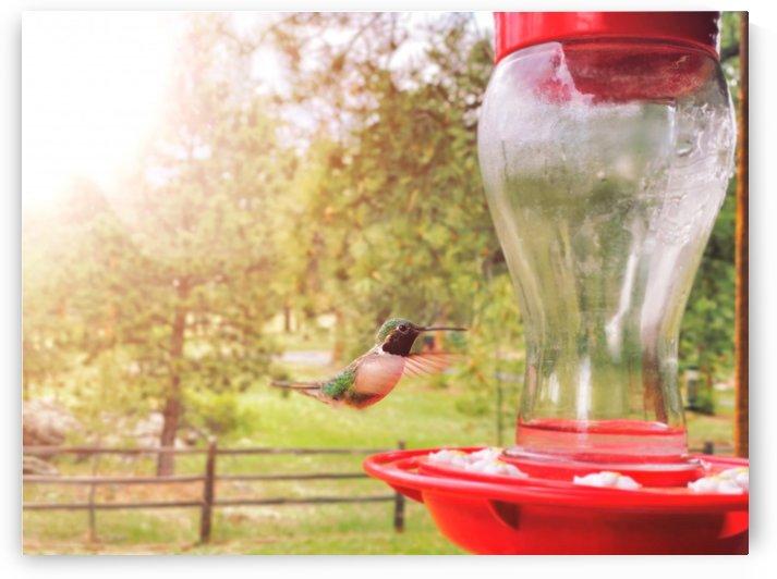 The Hummingbird by Brian Johnson Photo
