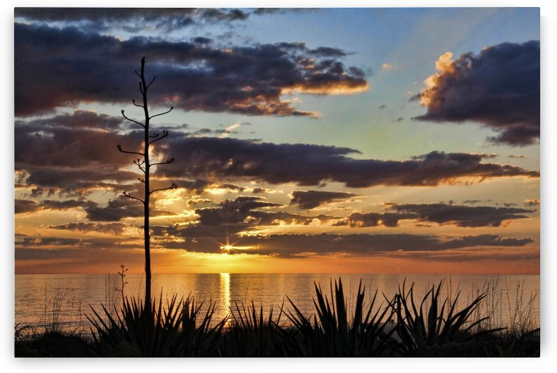 Agave Sunset by HH Photography of Florida