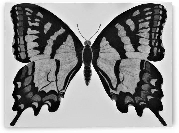Monarch Butterfly 1998 Black & White by Norma Roman Creations