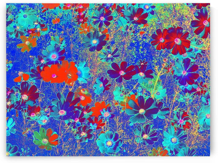 Cosmos Flowers Blue Red by CvetiArt