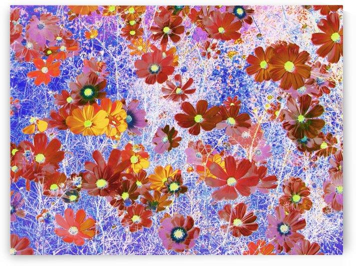 Cosmos Flowers Brown by CvetiArt