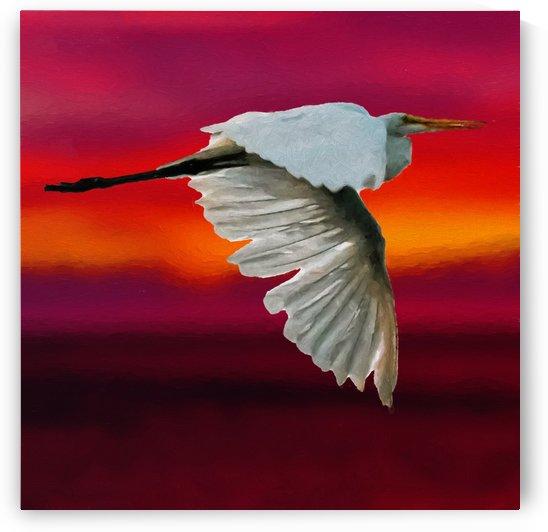 Egret in sunset by Jacqueline Sleter
