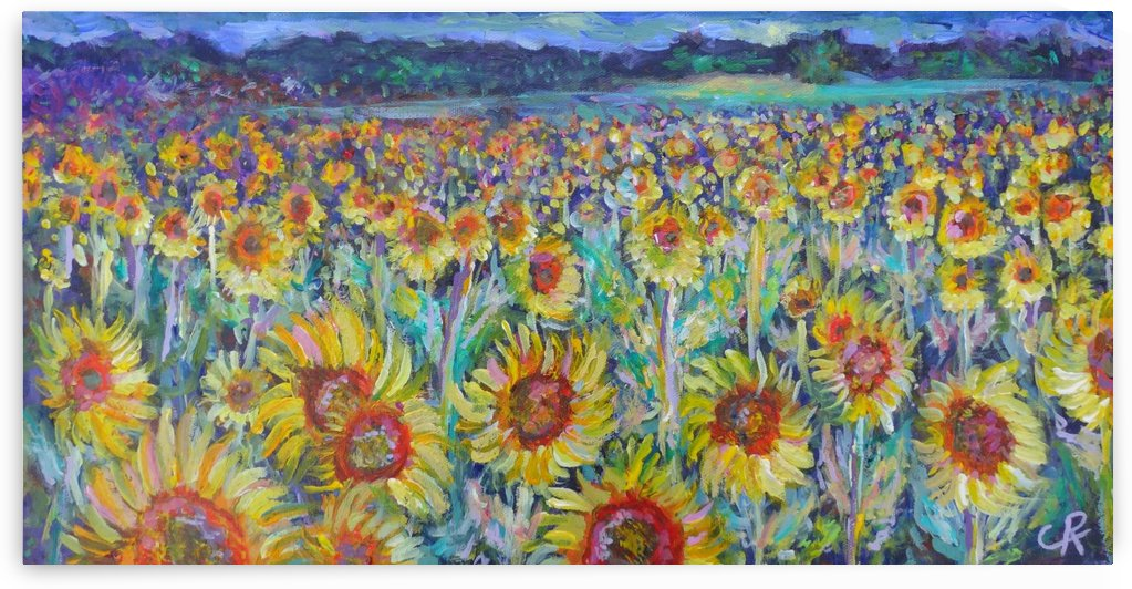 Sunflowers in field by Chris Rutledge