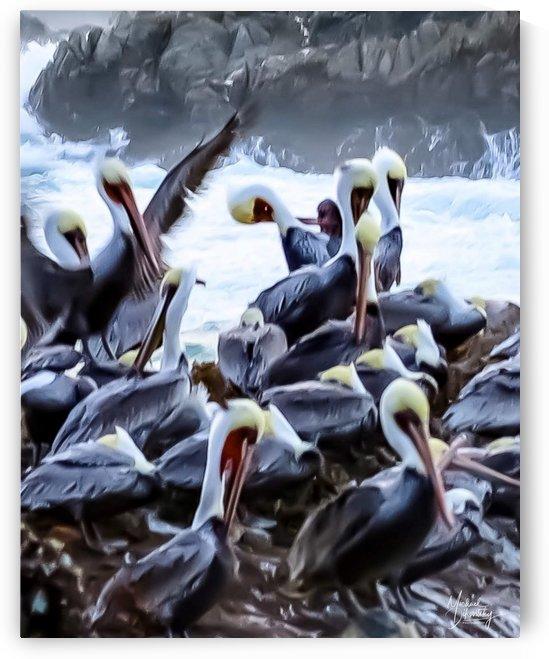 Gathering of Pelicans  by Michael Stephen Dikovitsky