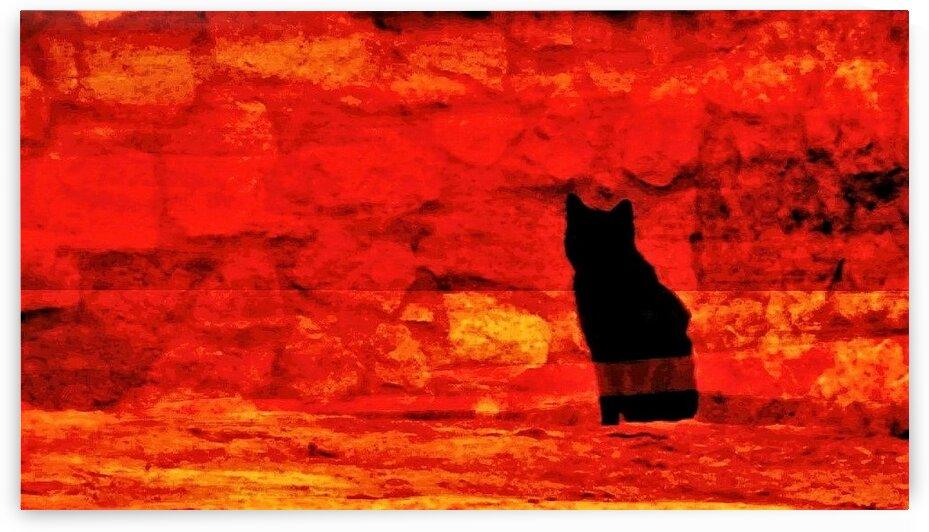 Red Hot Black Cat by Rich Eginton
