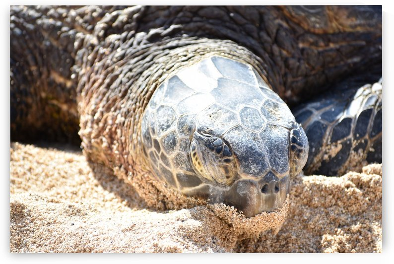 Turtle Close up 2 by Zzyzx