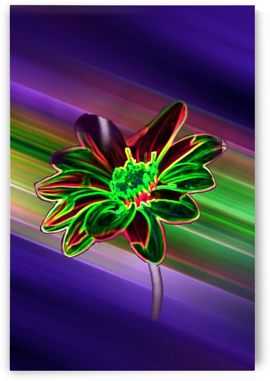 Neon Tithonia aka Mexican Sunflower by ImagesAsArt By John Louis Benzin