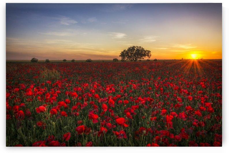 horizon plant sunrise by ANA PAULA RIUS