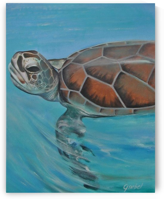 turtle by Bill Gimbel