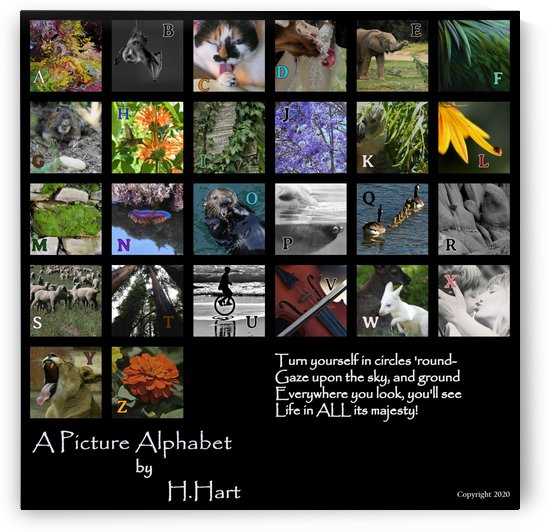 Picture Alphabet by H.Hart Photography