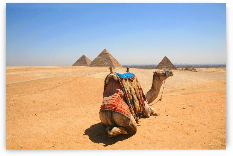 Kairo Pyramids camel - Egypt 0470 by Move-Art