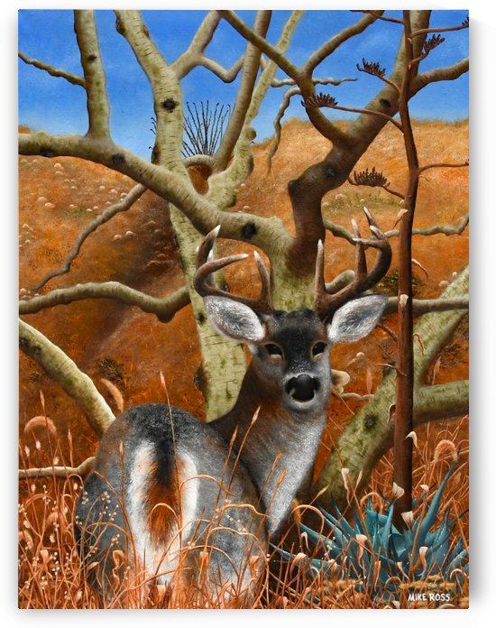 Coues Whitetail Deer by Mike Ross