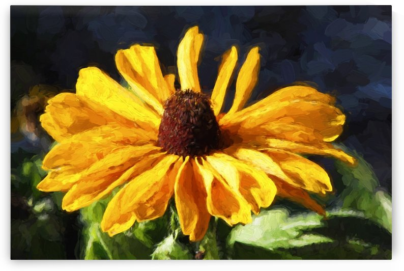 Golden Coneflower by HH Photography of Florida