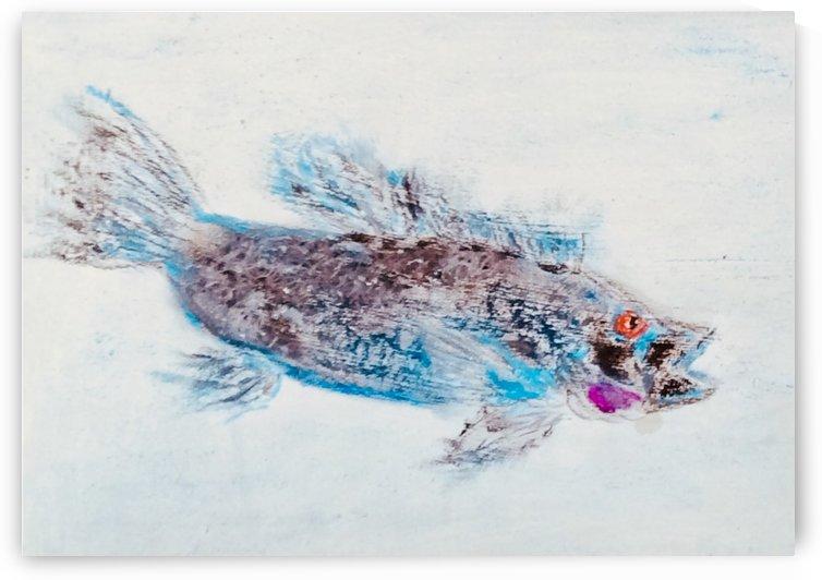 Black Sea Bass  by Zaramar Paintings