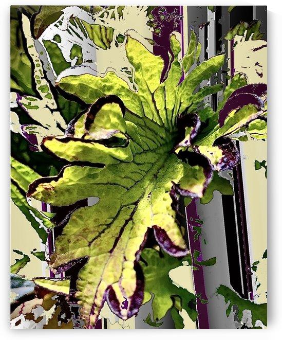 Variegated Leaf 200710 by BotanicalArt ca
