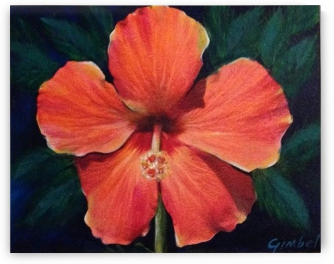 Hibiscus by Bill Gimbel