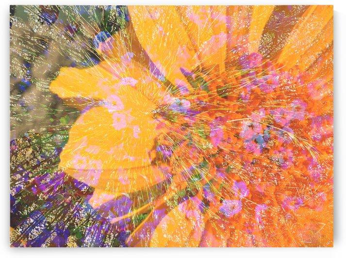 Radiant Sun by Grammydudley