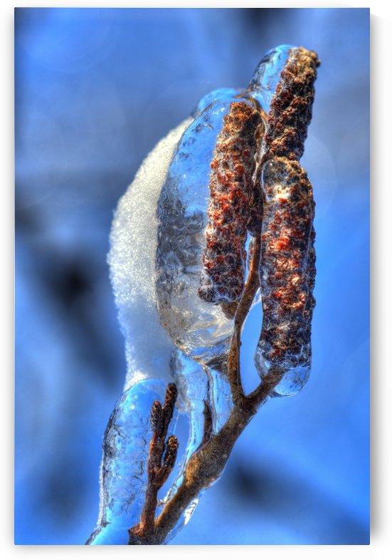 Glace by Christian Bibeau