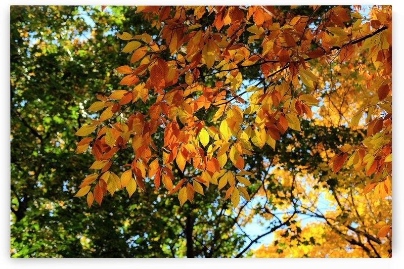 Jaune orange et vert by Christian Bibeau