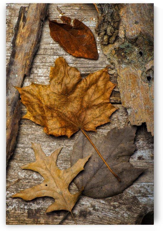 Nature morte by Christian Bibeau