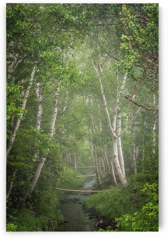 Enchanted by David Brophy