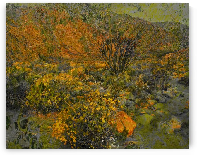 Desert Splendor  by Grammydudley