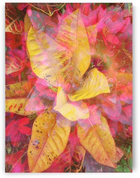 Amazing Pinwheel  by Grammydudley