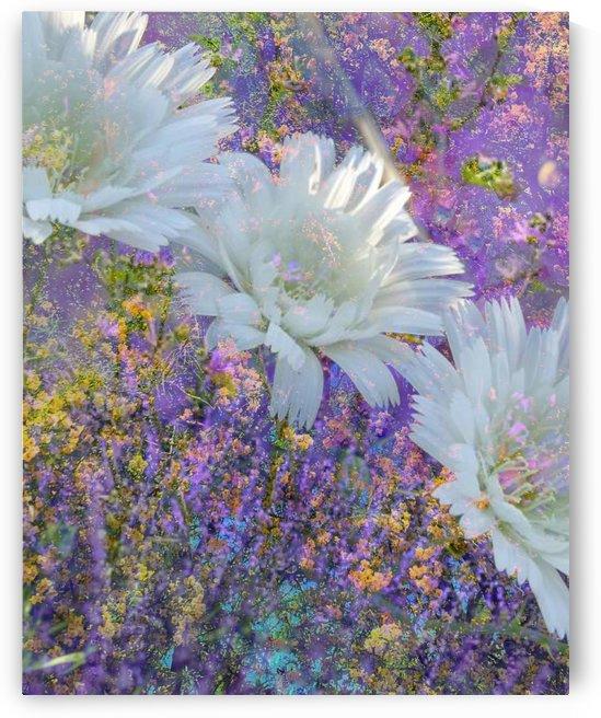 Garden Delight by Grammydudley
