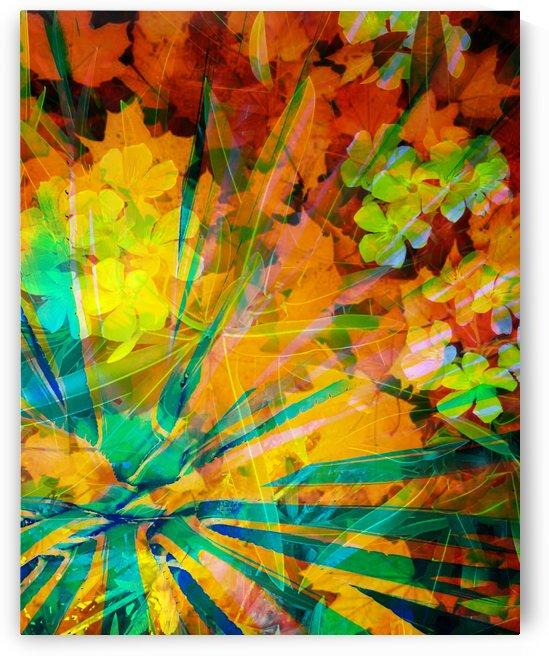 Color Burst by Grammydudley