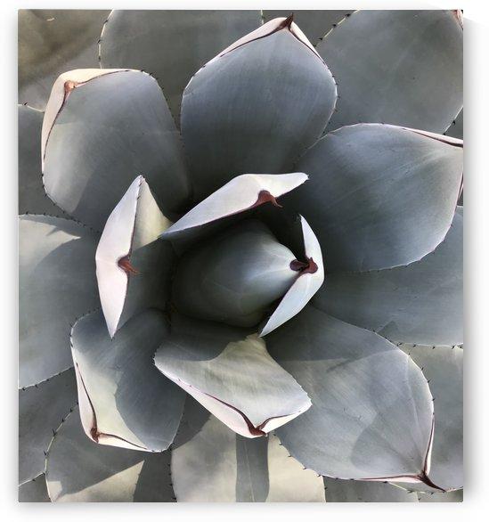 Succulent by Sheri Schwan