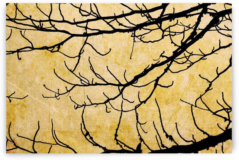 Nature - XVIII by Carlos Wood