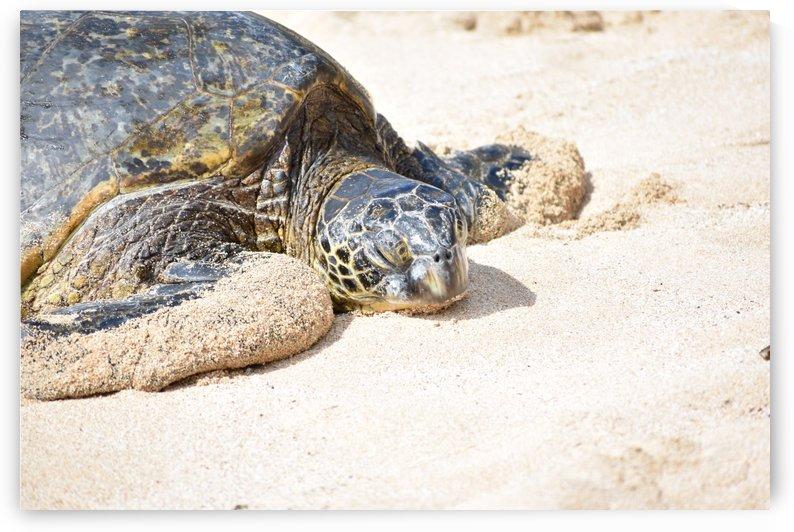 Turtle 14 by Zzyzx