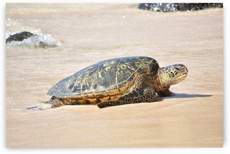 Turtle 13 by Zzyzx