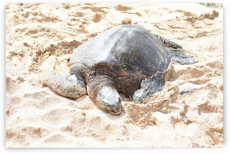 Turtle 9 by Zzyzx