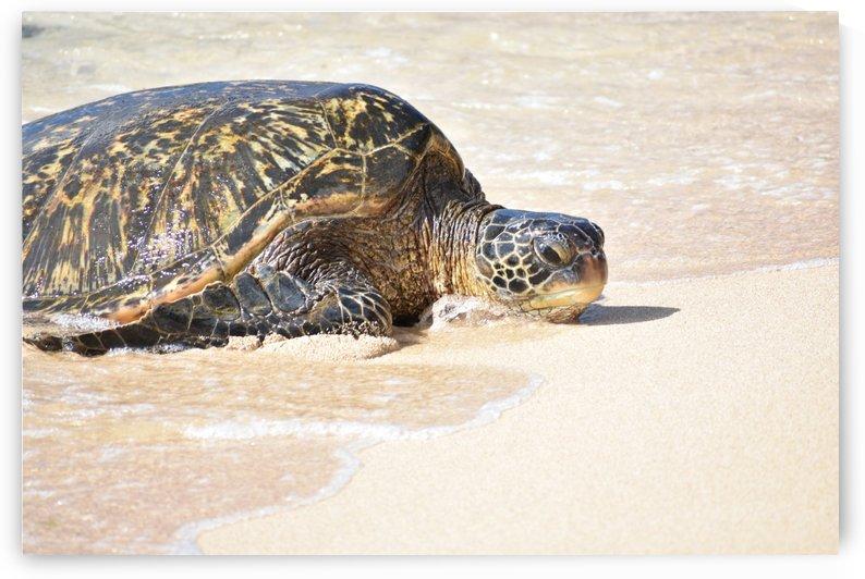 Turtle 6 by Zzyzx