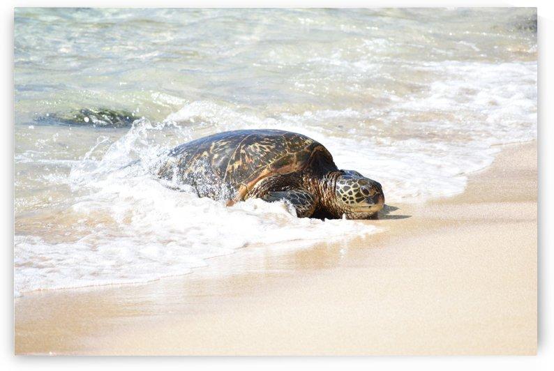 Turtle 4 by Zzyzx