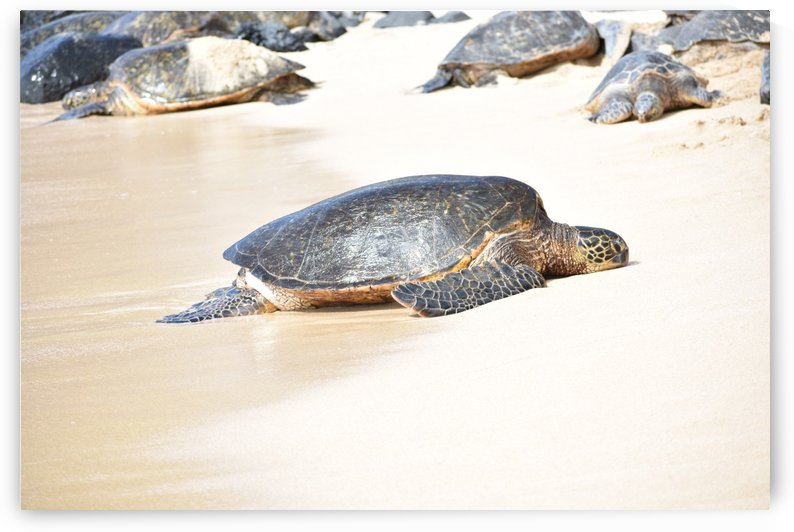 Turtle 3 by Zzyzx