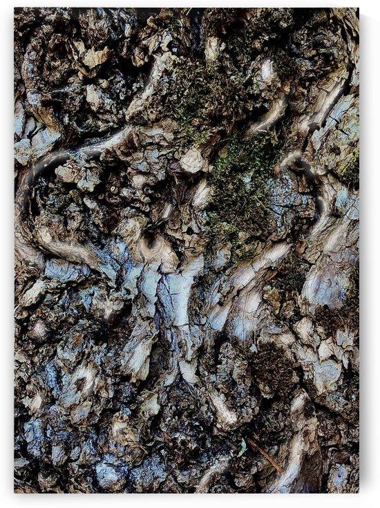 Tree Bark Texture by BotanicalArt ca