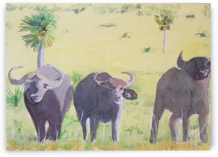 East Africa Buffalo by Adrian Butt