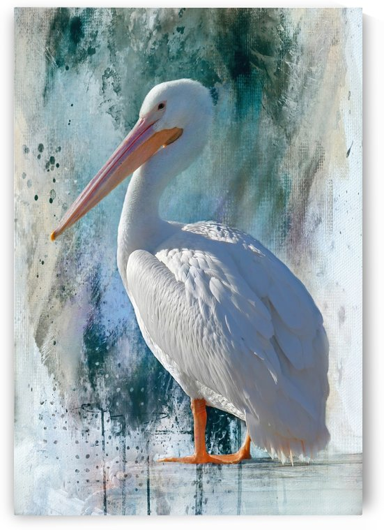 White Pelican Portrait  by HH Photography of Florida