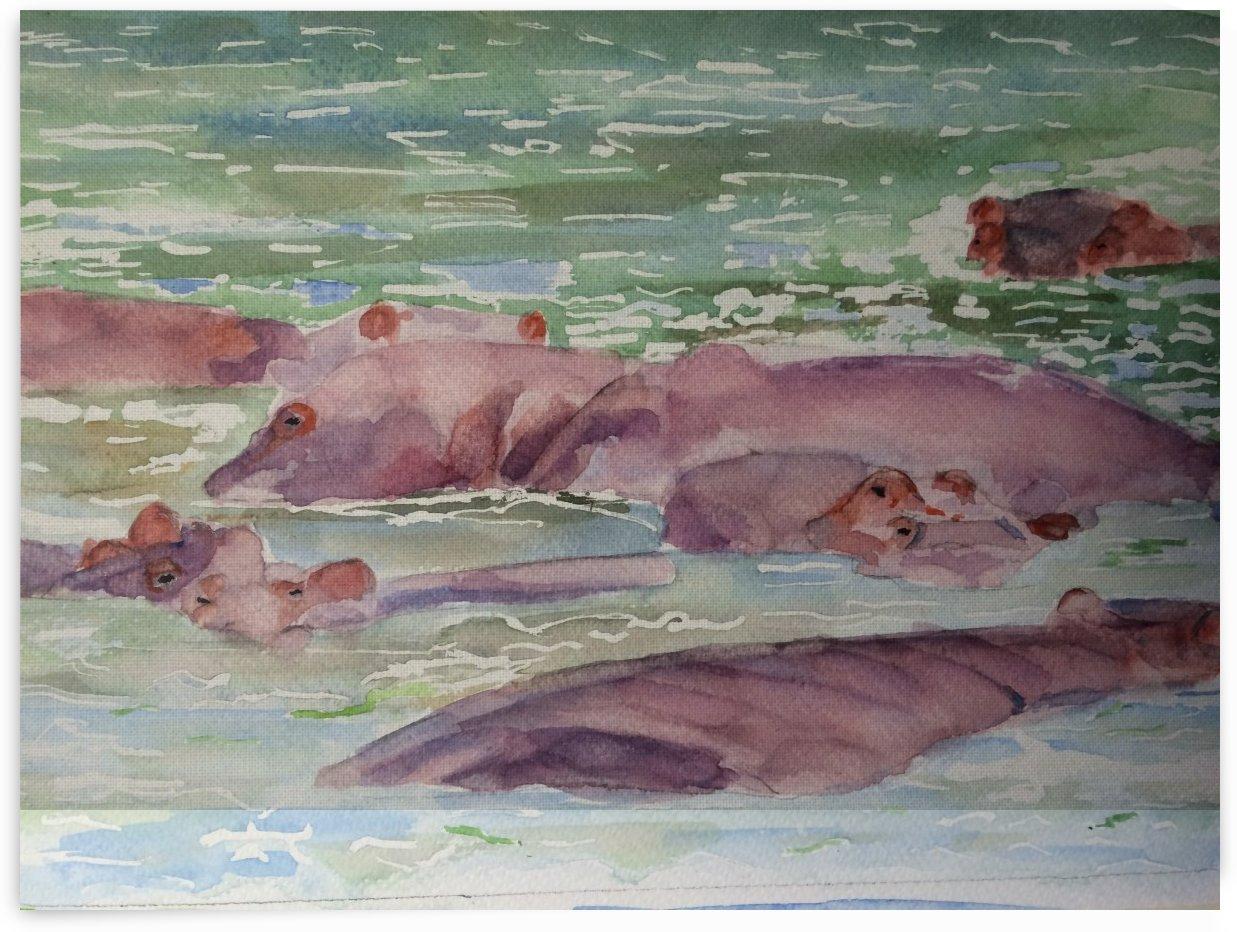 East Africa Hippopotamus by Adrian Butt