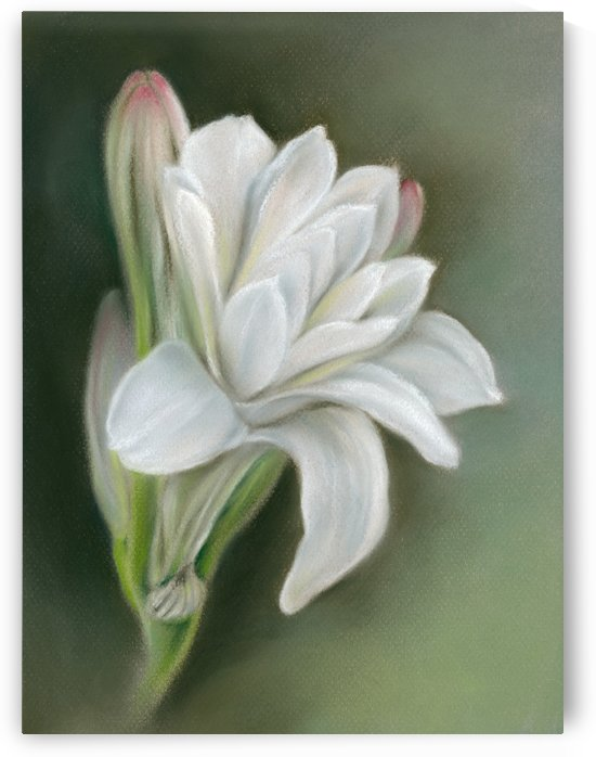 Tuberose White Flower and Buds by MM Anderson