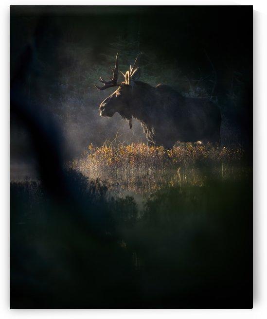 Ombre et lumiere  by Philippe DE-BRUYNE