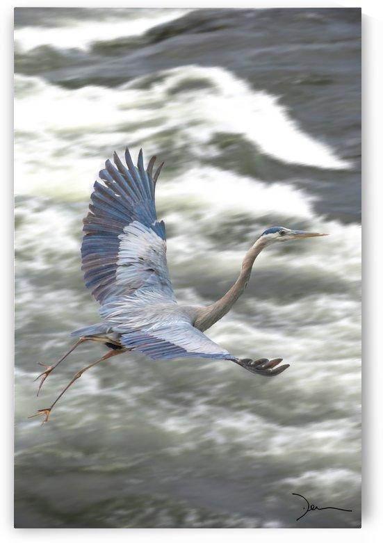 Grand heron bleu by Jean-Louis Desrosiers