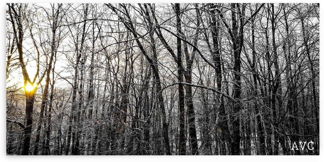 Through the Icy Trees by Angelina V Coronado