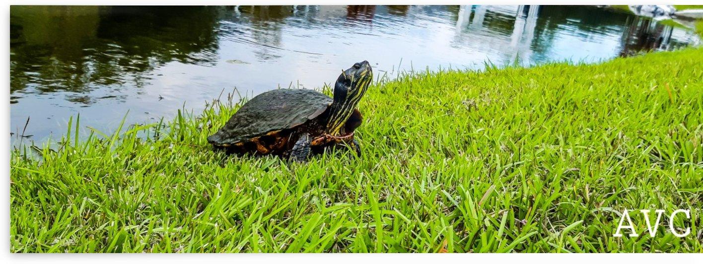 Turtle Portrait by Angelina V Coronado